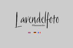 Pflanzenarchiv Lavendelfoto